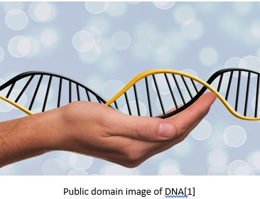 Genetic Genealogy by popular US professional genealogy services, Lineages: image of a hand holding a double helix.