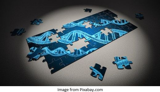 Genetic Genealogy by popular US professional genealogy services, Lineages: image of a DNA puzzle.